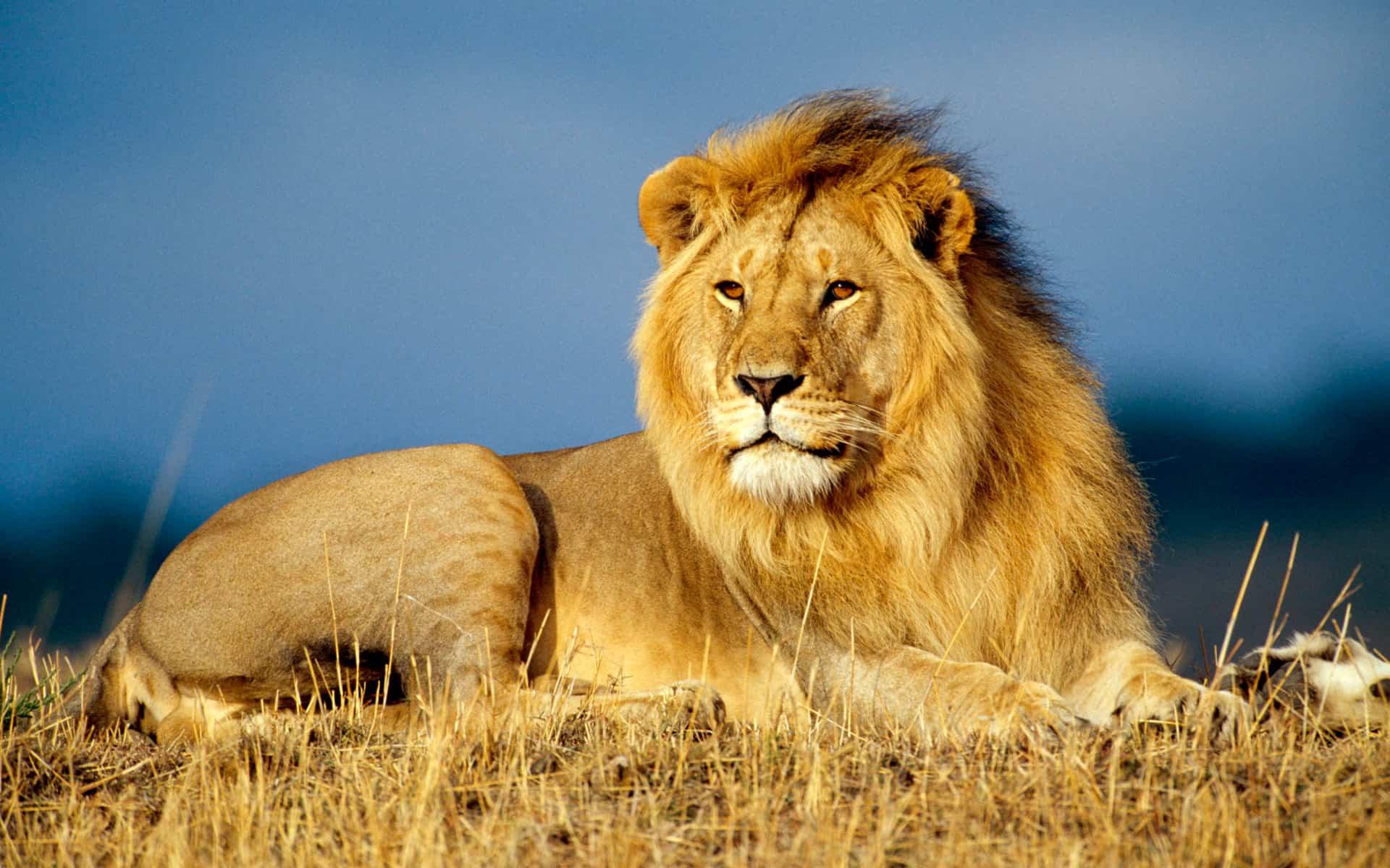 совместимость лев лев в любви