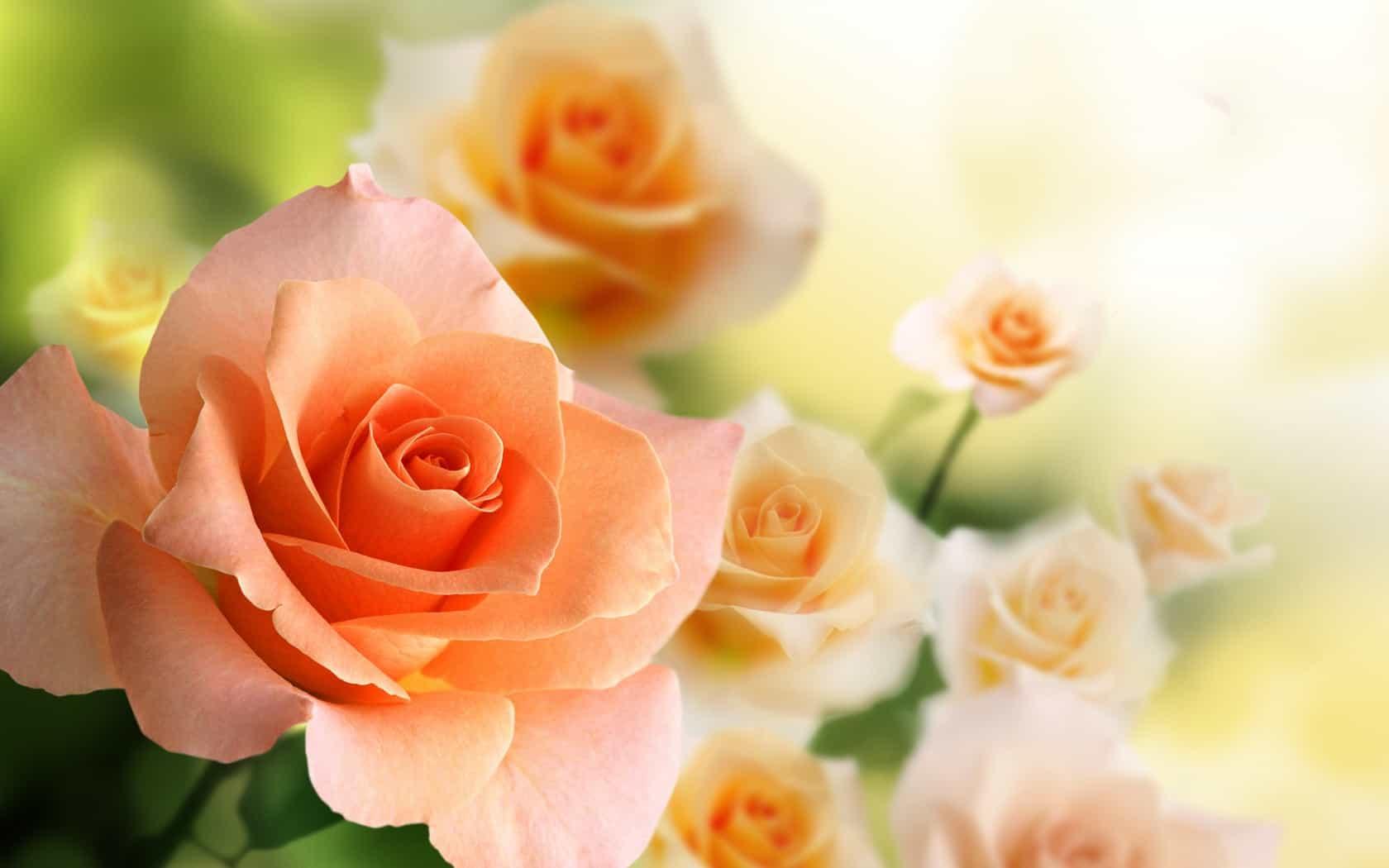 значение цвета роз в букете