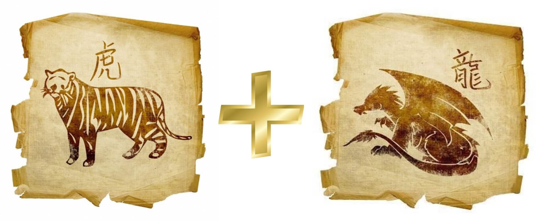совместимость тигр дракон в отношениях