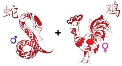 совместимость змея петух в любви