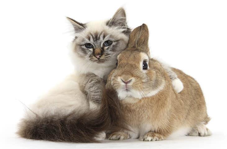 знак Зодиака Кролик (или Кот)