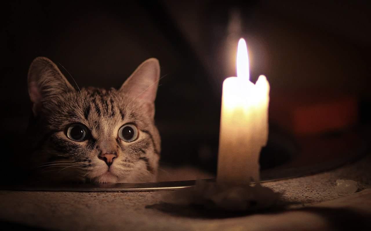 гадание с котом