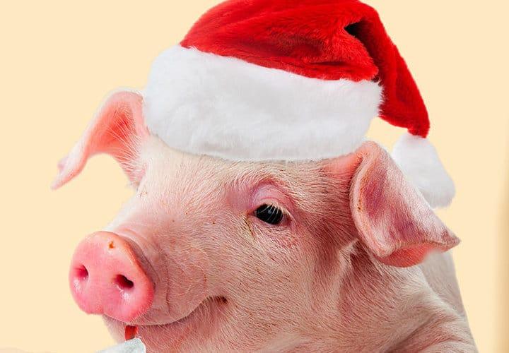 Фен шуй прогноз на 2019 год свиньи
