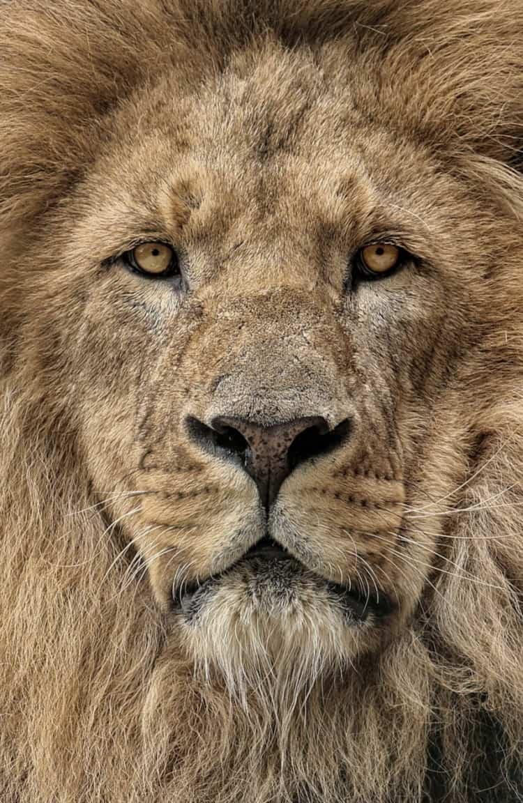 Гороскоп для Льва на Ноябрь 2019 года - работа ибизнес