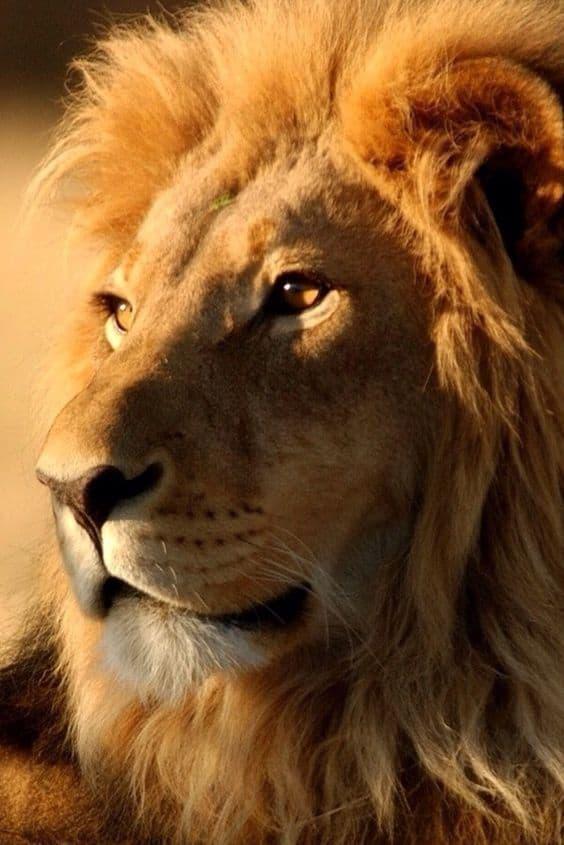 Гороскоп для Льва на Апрель