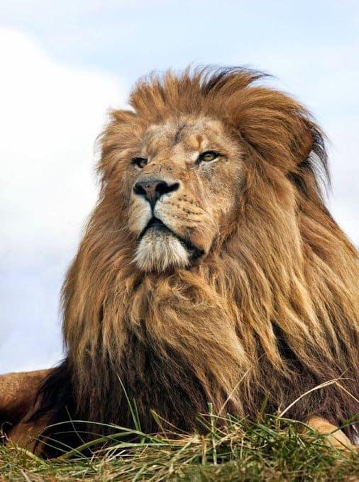 Гороскоп для Льва на Февраль 2019 года