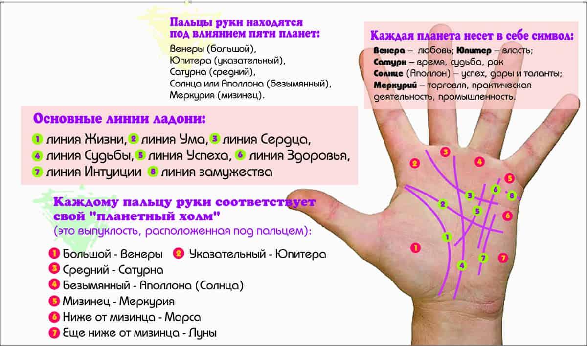 фото линий на руке и их значение