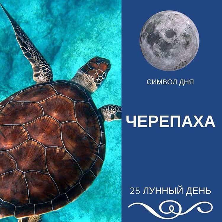 Черепаха - основной символ этого дня