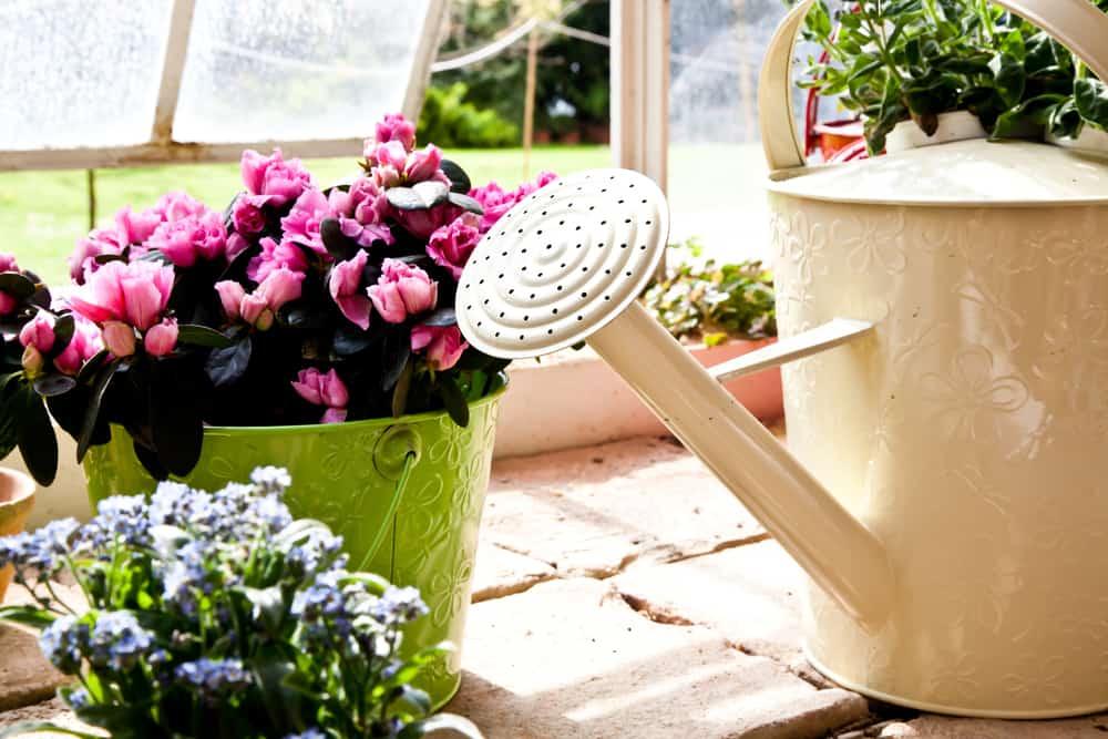 поливайте растения очень умеренно