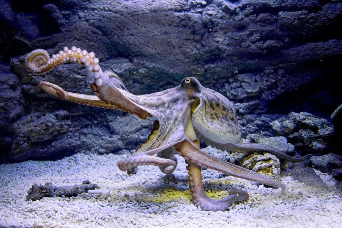 осьминог - один из символов 29 лунного дня