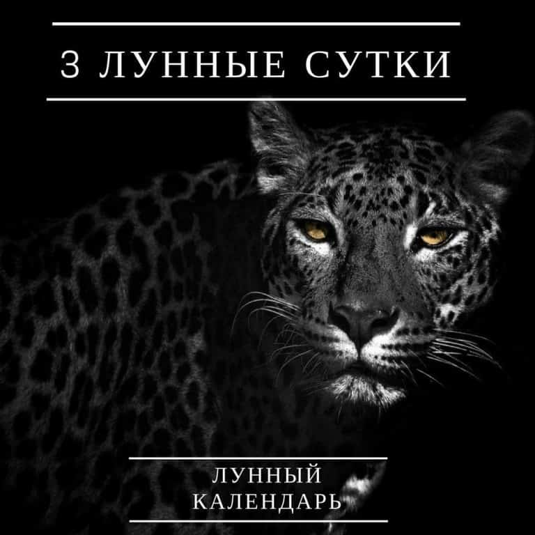 символ 3 дня: Леопард