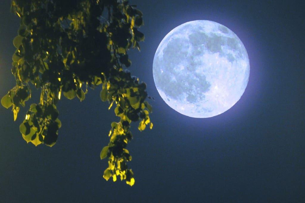 11 лунный день характеристика дня