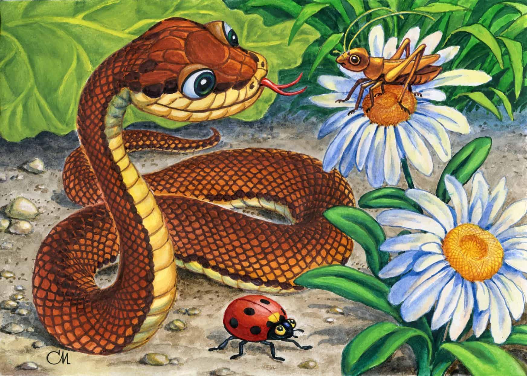 Год Змеи какие года рождения, характеристика знака