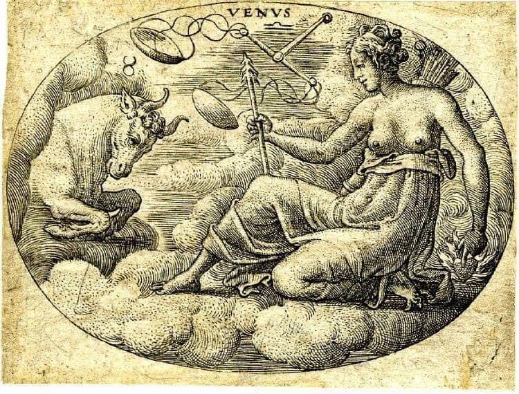 венера в тельце у мужчины