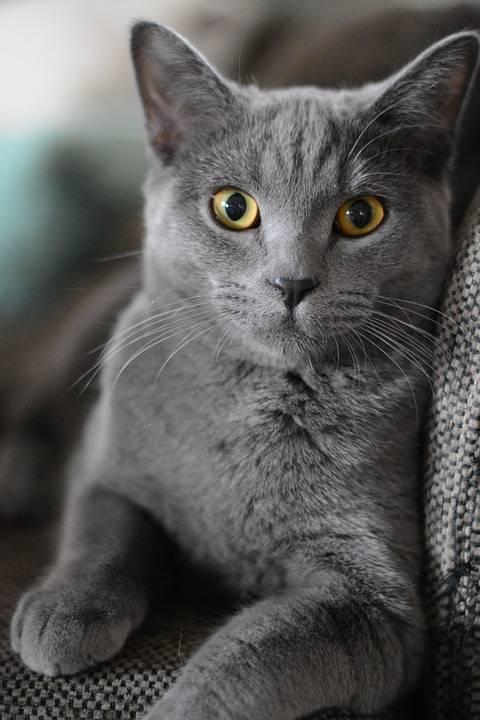 Ашлеша - знак кота