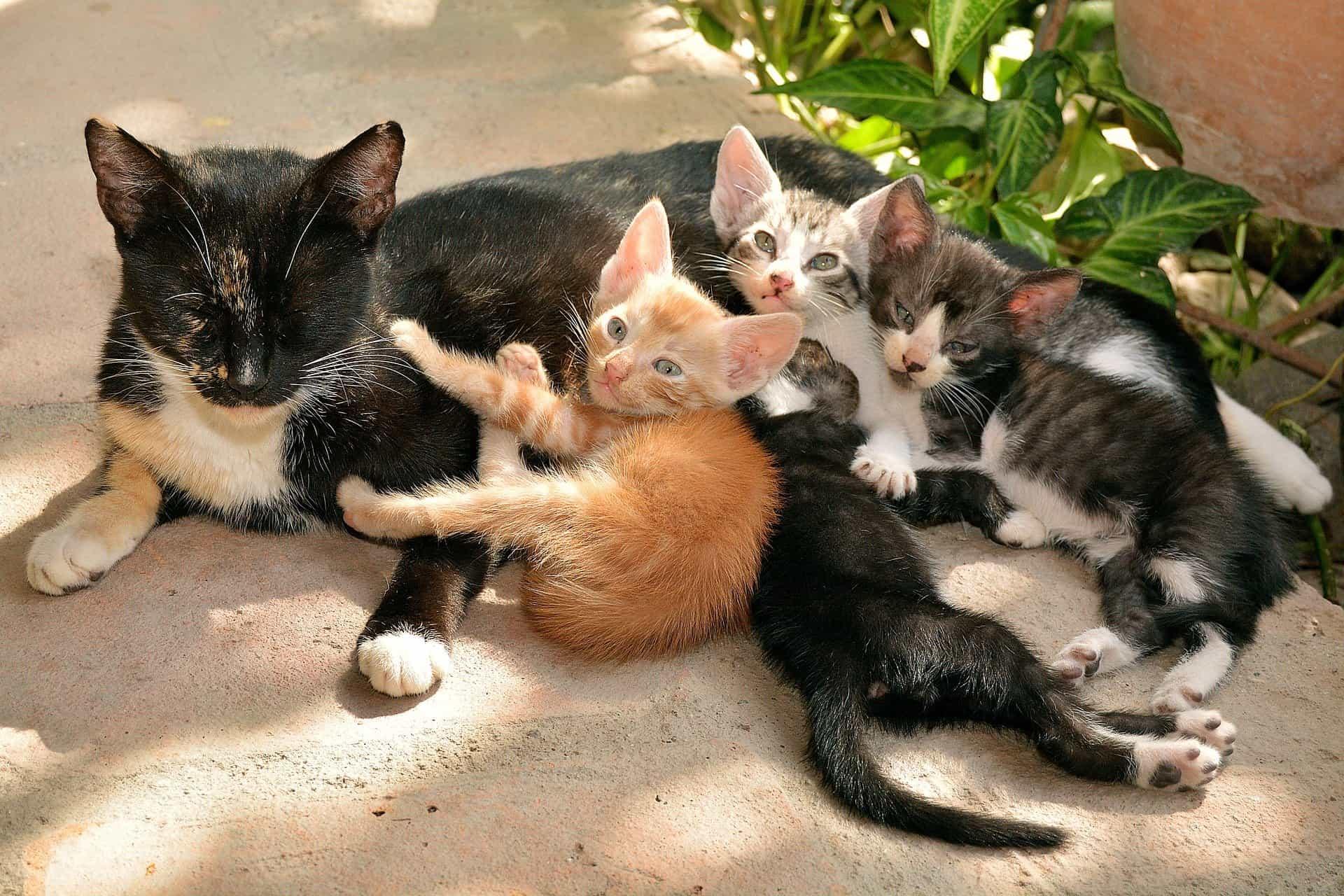 К чему снится кошка с котятами толкование по сонникам