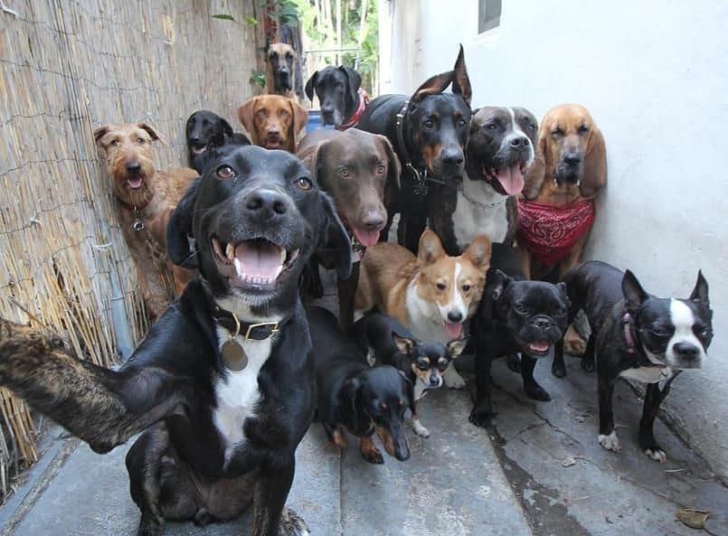 к чему снится много собак