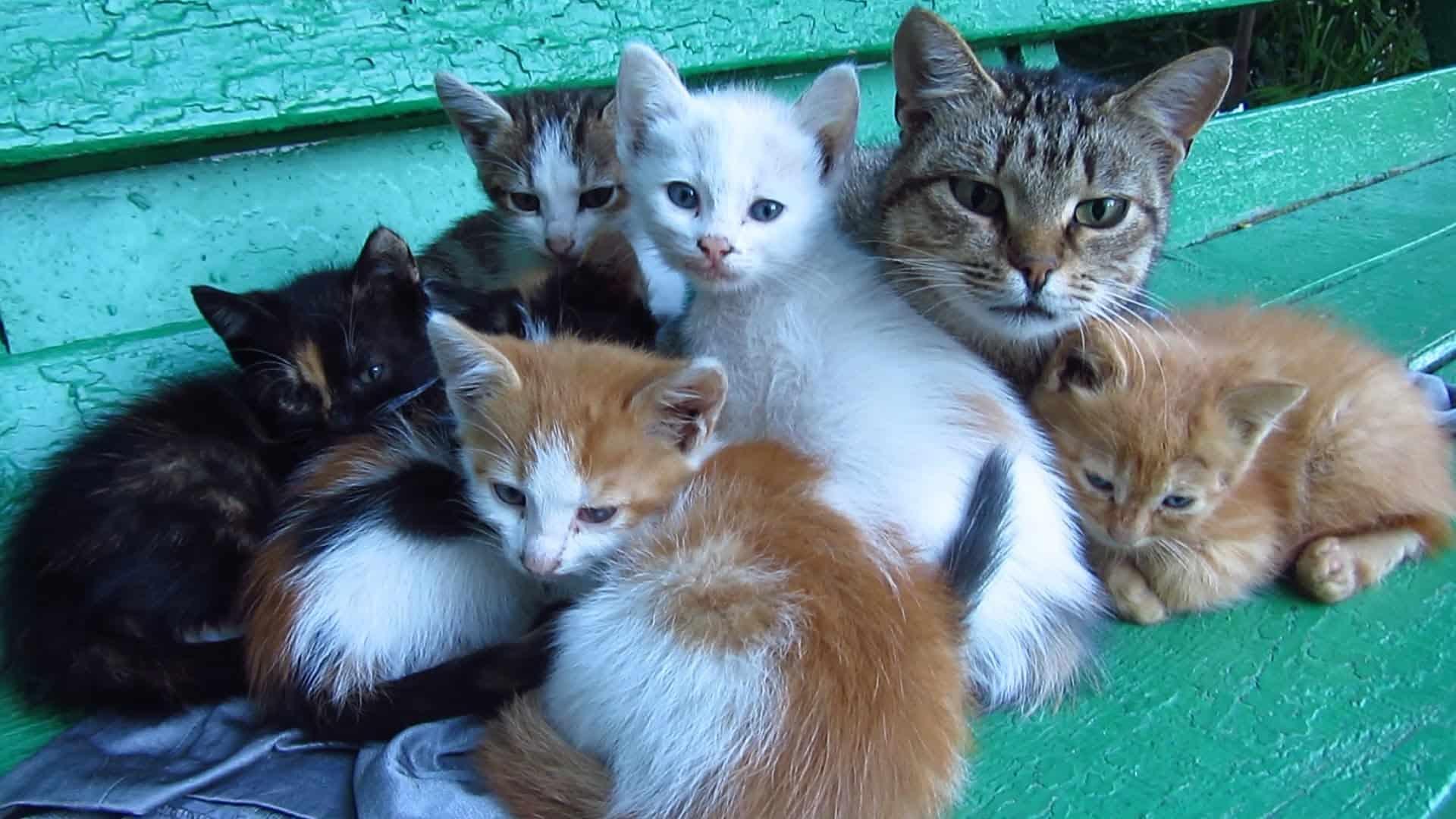 К чему снится кошка с котятами — толкования популярных сонников