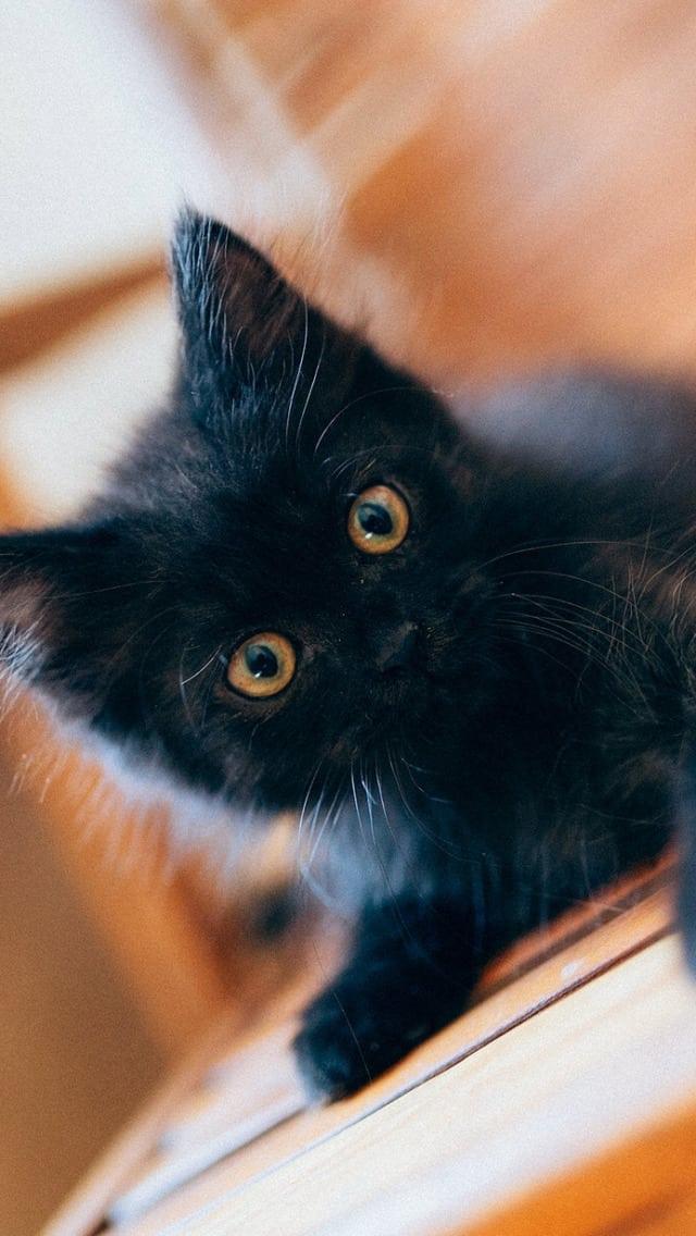 сонник черный котенок