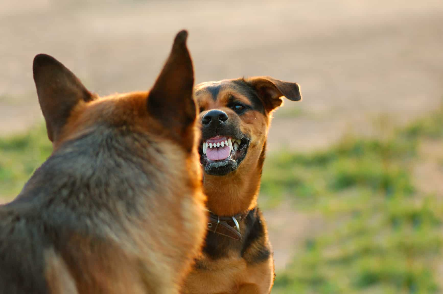 злобная собака сонник
