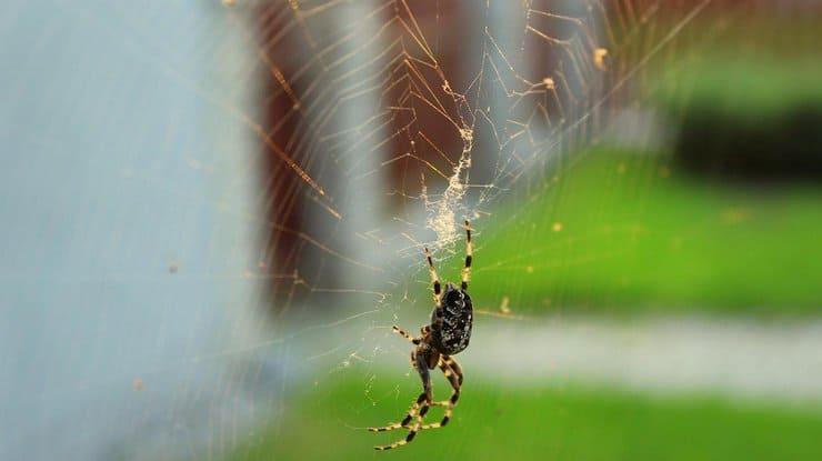 К чему появился паук в доме примета