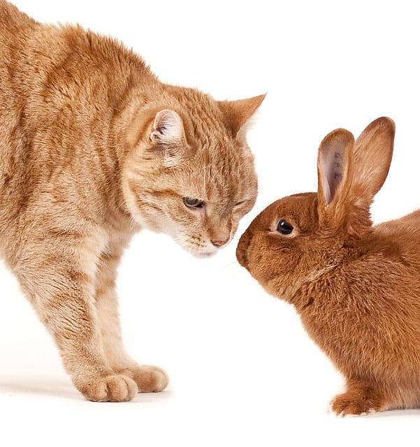 Кот или Кролик - кто вам больше по душе?