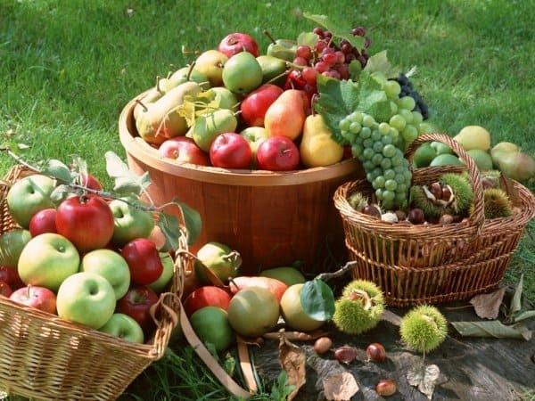 Лунный посевной календарь на август 2019 года для садовода и огородника