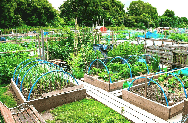 Лунный посевной календарь на июль 2019 года для садовода и огородника