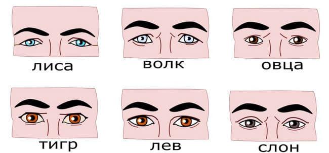 Физиогномика лица: как читать характер человека по физиономии