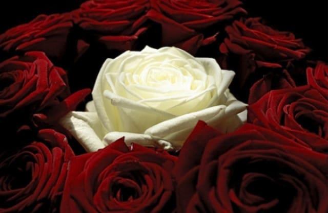 розовая свадьба сколько лет