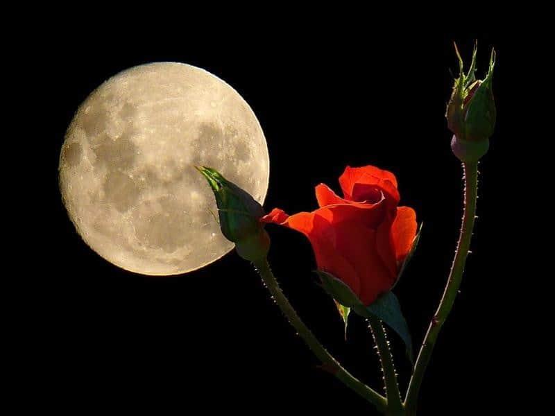 лунный календарь цветоводства на 2019 год