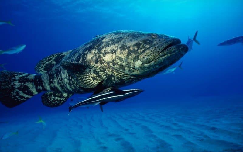 к чему снится большая рыба