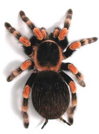 к чему снятся пауки много маленьких