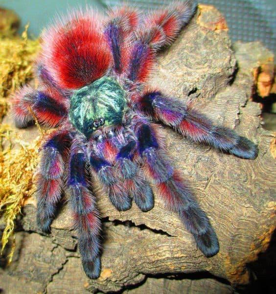 к чему снятся пауки много