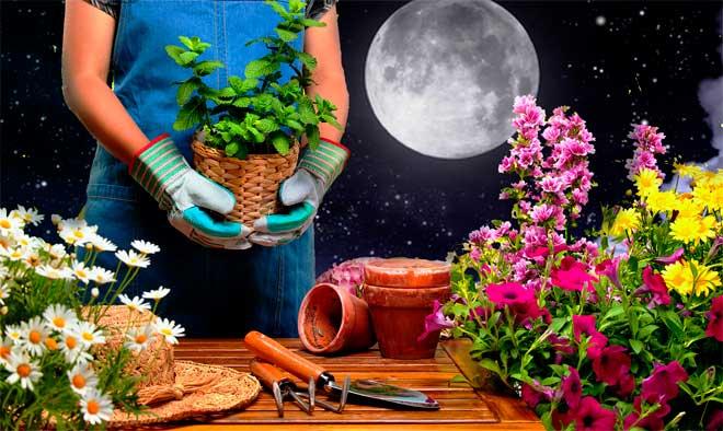 лунный календарь цветовода на 2019 год