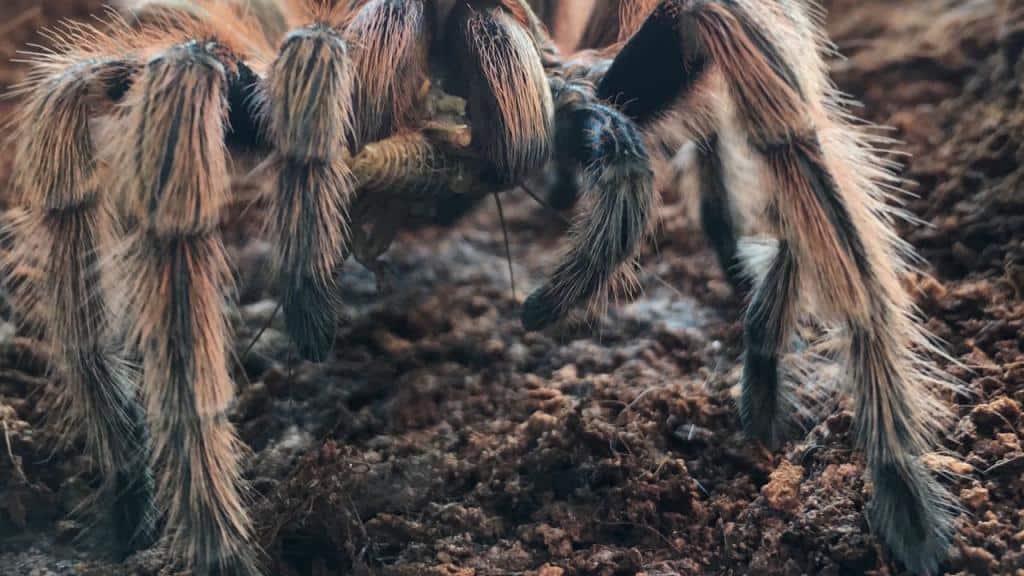 приснился большой паук