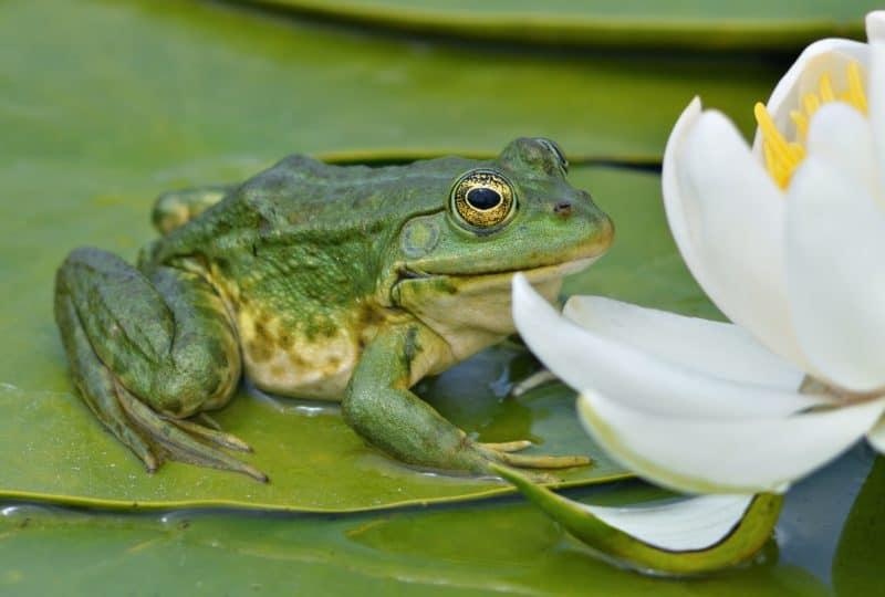 жаба во сне