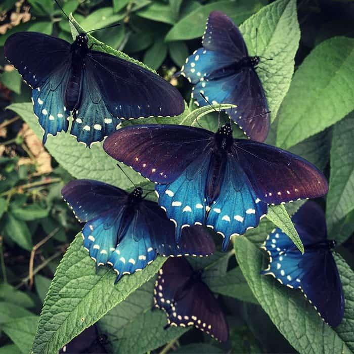 Разведение бабочек - оригинальное хобби
