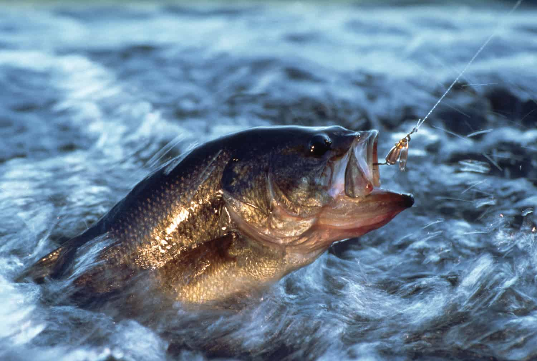 есть рыбу во сне для женщины