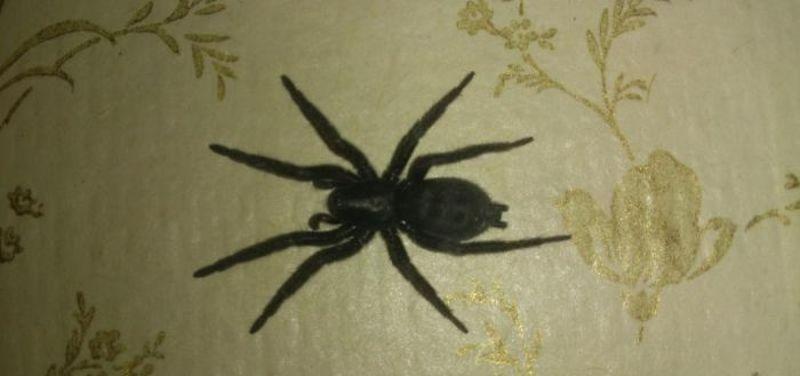 пауки в доме