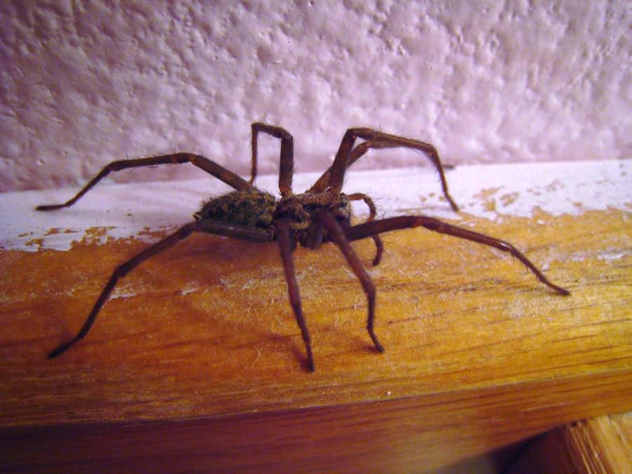 увидеть паука в квартире