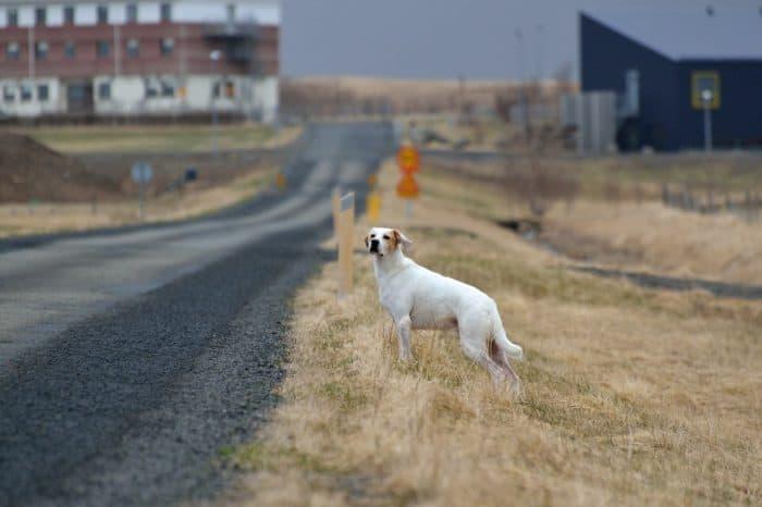 к чему сбить собаку