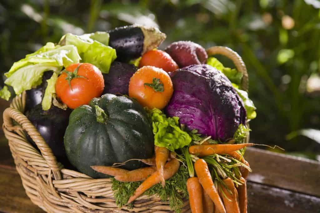Лунный посевной календарь на сентябрь для садовода и огородника