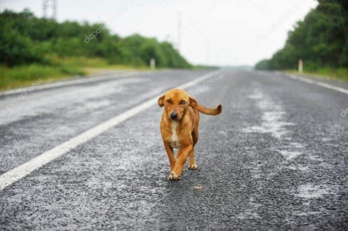 примета сбить собаку
