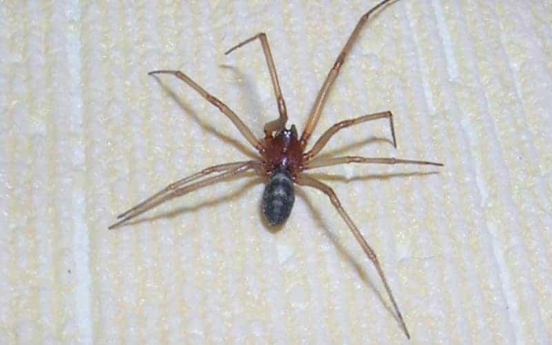 к чему паук в доме