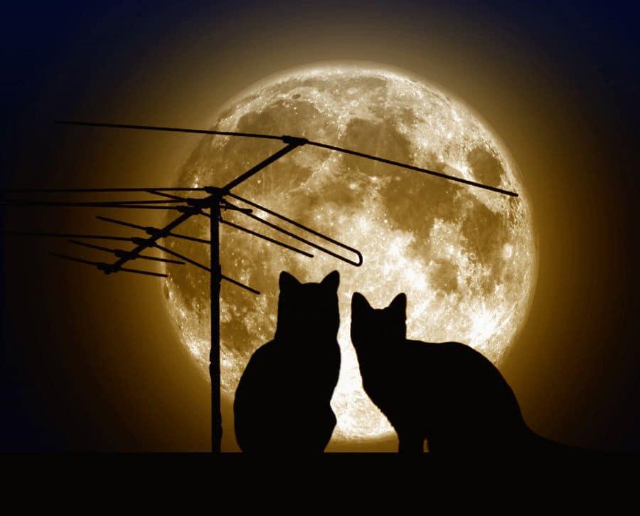 Луна в 9 доме гороскопа