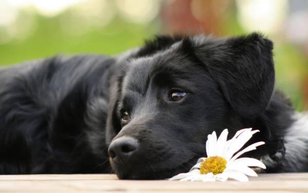 вой собак