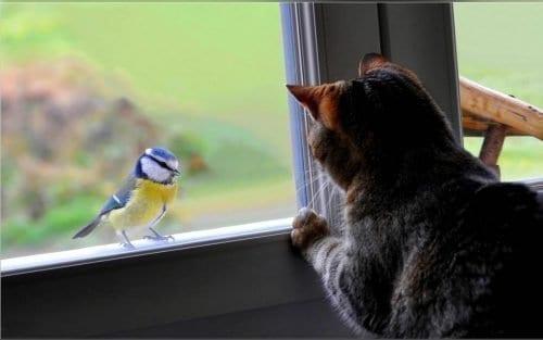 Синичка стучится в окно - что предвещает примета?