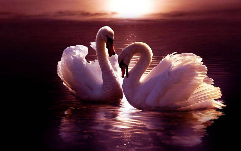 остынет вода, верность фото черно белые самые тёплые поздравления