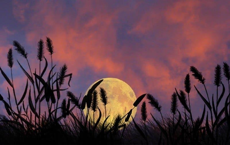 ночное светило влияет на рост и развитие растений